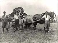 Haymaking at Standon Farm Home