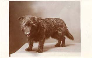 This studio portrait of St Cuthbert's pet dog was sold as a postcard to raise money for the Home.