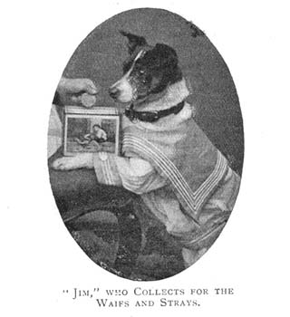 With his sailor's outfit and collection tin, this dog has been dressed-up to raise money for the Rover League. Children could involve themselves in the work of the Society by enrolling their pets in this League, which was run by a dog called Rover. They would send in their donations to the Society, and write letters from their pets telling everyone about their activities.