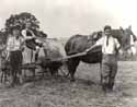 Haymaking with a horse-drawn bail-maker